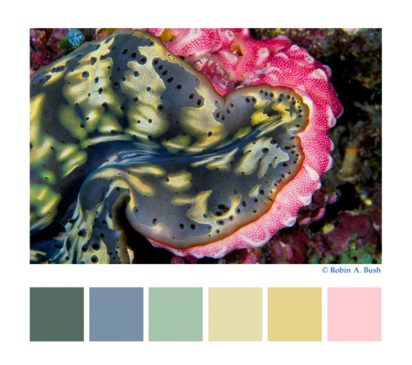 palettes, Voices of the Earth inspirational fine art underwater photography for custom interior design products:  fabric, furniture, lit displays, window and wall coverings, lighting for yachts, residential, business, healthcare interiors and architecture